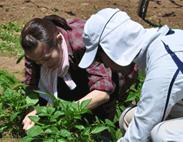 都心で新鮮野菜を収穫、通学スタイルの菜園…… 平日会社員 週末は趣味で農業人
