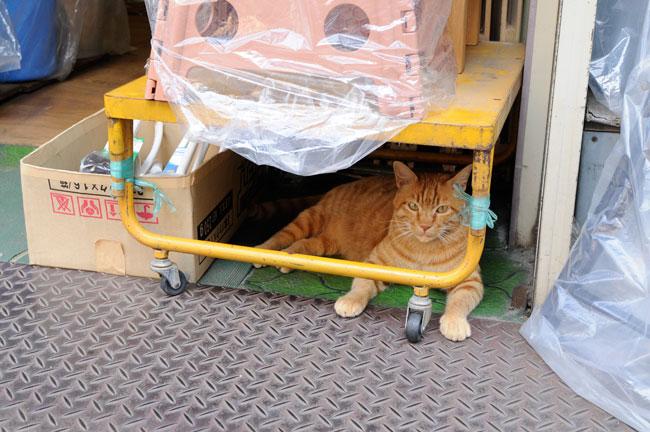 近隣の店舗をはしごして涼むフリーダムな猫。このほかにも多くの店舗で、軒先に鎮座する看板猫の姿が見られました。愛情をもって育てられているからか、人になれたお行儀のよい猫が多かったです