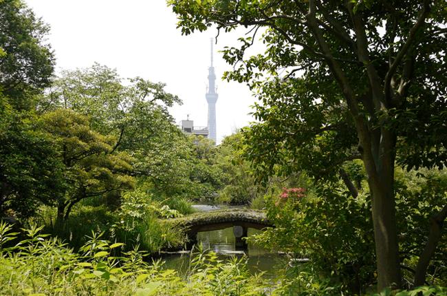 1805年に造成された都立庭園「向島百花園」。建物や池、石碑を巧みに配した美しい意匠と四季折々の自然がなんとも心地よい、地元のオアシスです