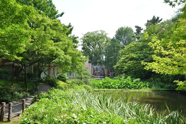 御殿山ガーデンには、都心とは思えない緑が広がる
