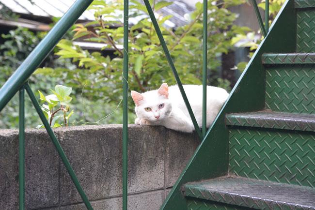 路地裏で昼寝をしていた白猫。「これからは猫もシェアする時代だニャア」