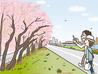 桜の時期には、川面に映る桜を楽しむ