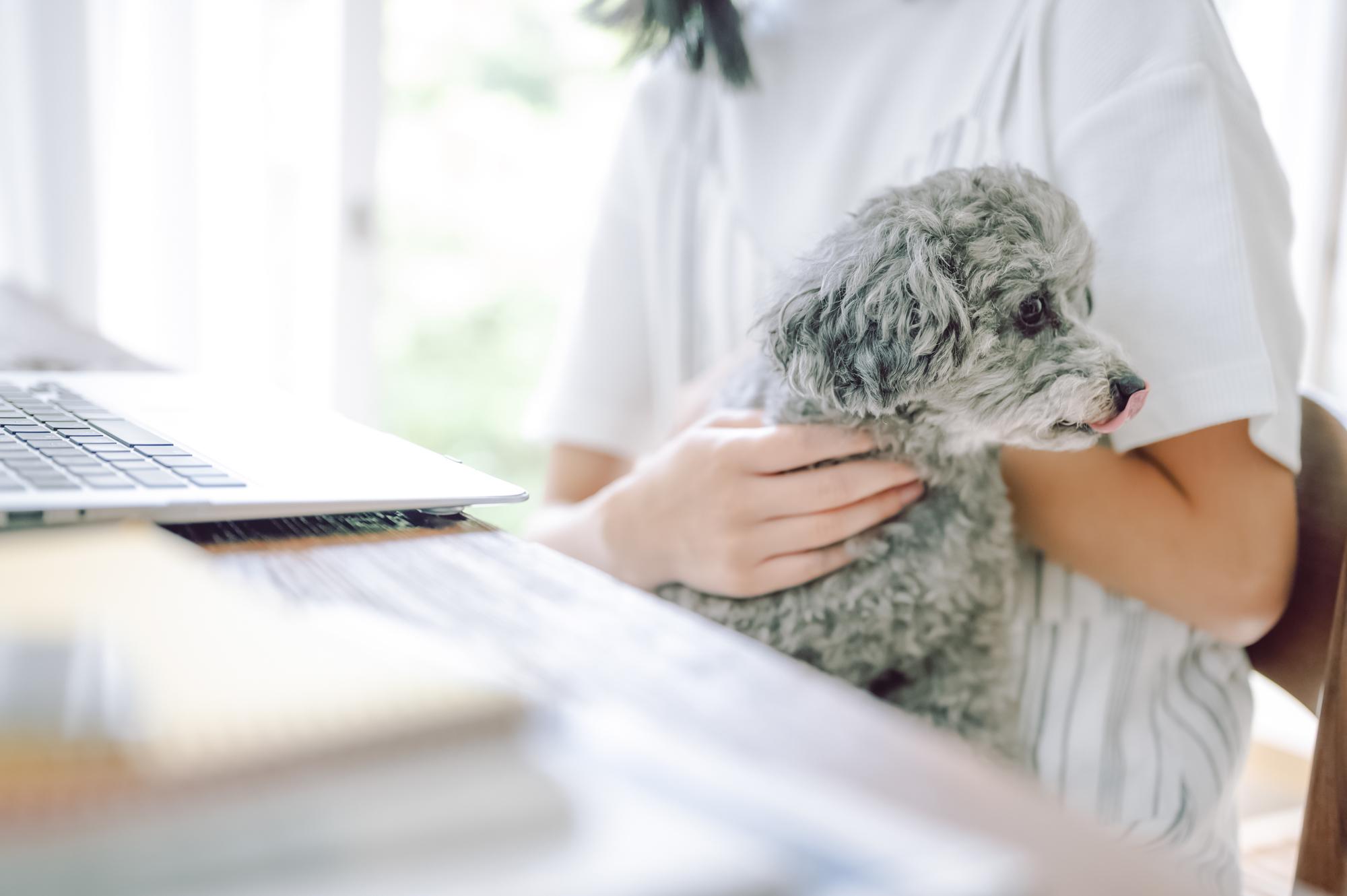 を 飼う 費用 犬