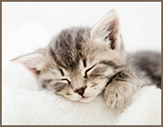 pet_cat_183