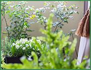 mansion_veranda_gardening_183