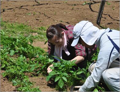 畑にいっぱい生えてくる雑草に栄養をとられないように、引き抜く。