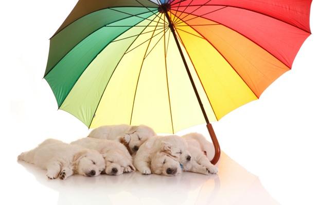 愛犬がストレスフリーで梅雨を過ごせるように心がけたいこと