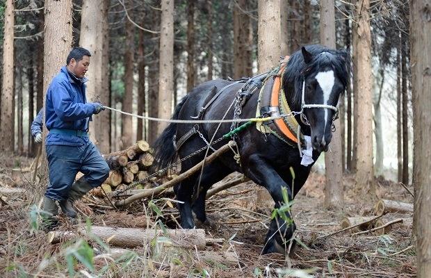 地球にやさしい木材搬出技術「馬搬」ってどんなもの?