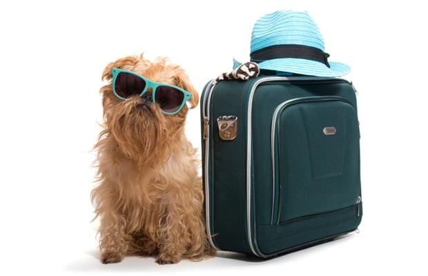 長期不在時における愛犬の世話は、いったいどうすれば良い?