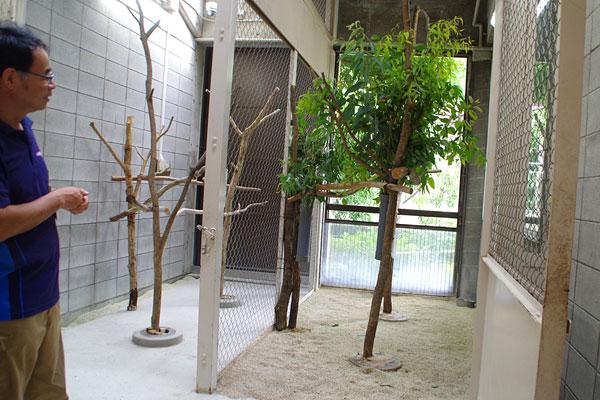 動物園のコアラ舎がエコで快適にリフォーム!その住み心地は?