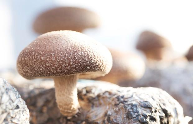 秋の味覚を自宅で収穫!『しいたけ栽培キット』に挑戦しよう(写真: iStock / thinkstock)