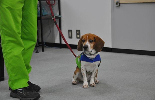 日本のシロアリ探知犬第一号となったノアくん。お仕事用ジャケットを着ると凛々しく、引き締まった表情になる(撮影:嘉屋恭子)