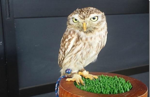 えっ、こんな鳥も飼えるの? 家でも飼える珍しい鳥(画像提供:日本ファルコンリーセンター)