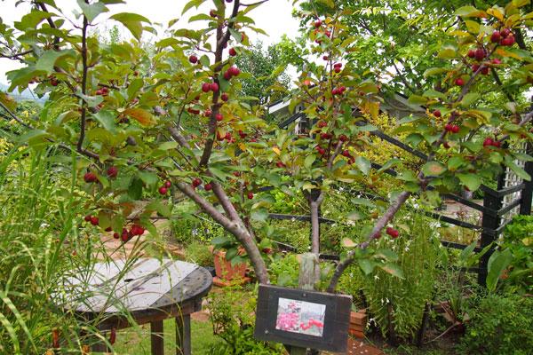 【画像5】ガーデン内にはそれぞれの植物にどんな実がなるのかなど、説明のための看板も手づくり。訪れる人を楽しませる工夫が見られる(写真撮影:SUUMOジャーナル編集部)