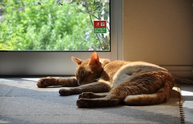 窓辺が心地いいのはなぜ? 猫の行動から考えてみた!(写真撮影:嘉屋恭子)