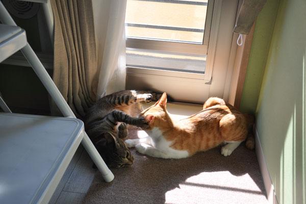 【画像3】じゃれあう猫を見る至福。外出したくないというのも納得(写真撮影:嘉屋恭子)