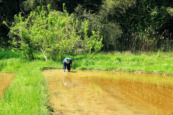 【画像4】近所に住む農家さんの田植えのお手伝い(画像提供:中川生馬さん)