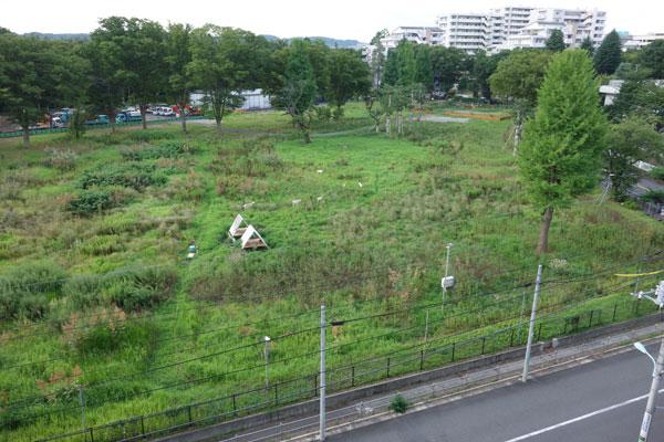 【画像4】出動から2カ月後。だんだん草が減ってきました(写真撮影:金井直子)