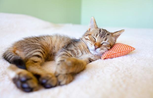 カウンセラーが厳選!猫の健康を考えたおしゃれ猫グッズ3選(写真: iStock / thinkstock)