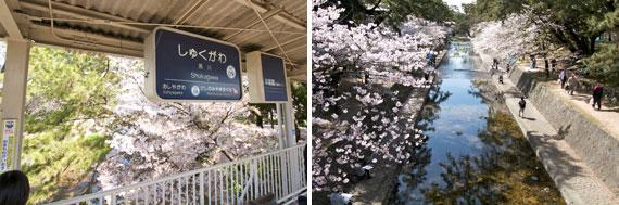 【図1】6位の夙川(しゅくがわ)は桜の名所。今年も多くの花見客でにぎわった(写真撮影/井村幸治)