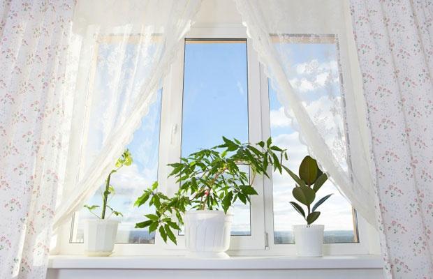 観葉植物の快適効果をネットでシミュレーション!(写真:iStock / thinkstock)