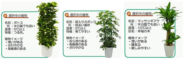 【画像4】リラックス効果が高い植物はポトスや斑入りカポック、マッサンギアナなどが代表的(画像提供:愛媛大学農学部 緑化環境工学研究室)