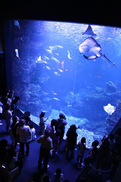 【画像1】水族館を貸し切っての一大イベント。毎年、住人のために趣向を凝らした夏祭りを実施しています (写真提供:長栄)