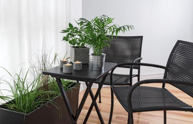 専門家に聞く、観葉植物の植え替えポイント5つ(写真: iStock / thinkstock)