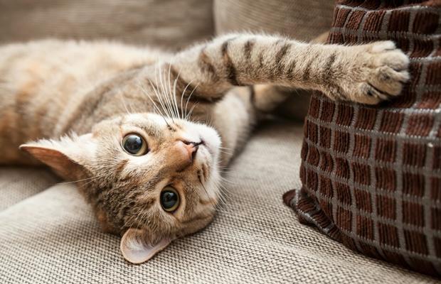 ペットの抜け毛対策、猫カフェではどうしてるの?(写真: iStock / thinkstock)
