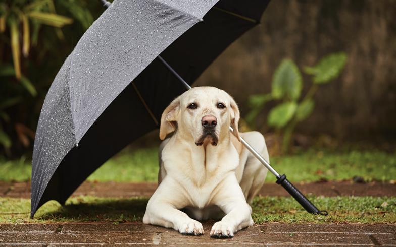 梅雨のお散歩のあとに…ペットの臭いを防ぐには?