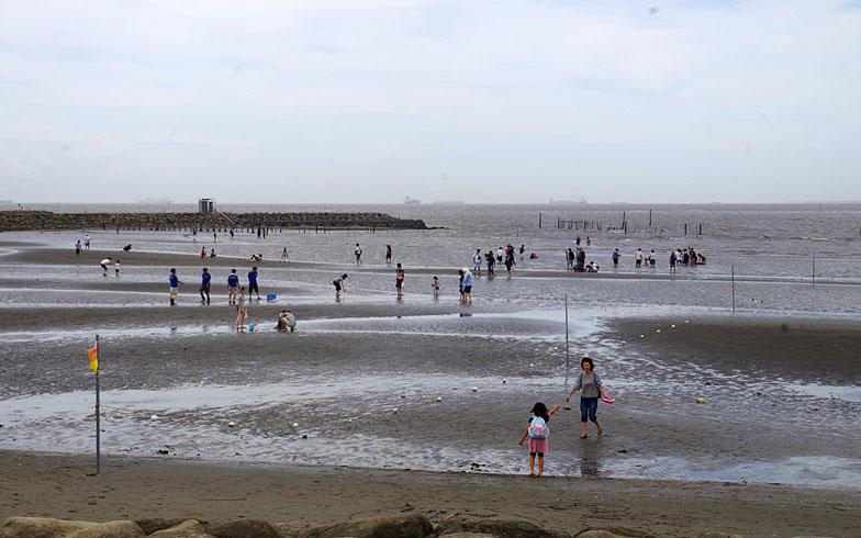 【画像6】海水浴よりも潮干狩りが似合いそうな干潮時の様子(写真撮影:玉置豊)