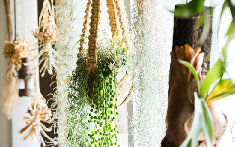 【画像2】バルコニー側にはお気に入りのグリーンがずらりと吊るされている。グリーンを掛けるという発想がステキ(写真撮影:片山貴博)