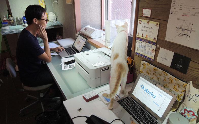 【画像8】たまにパソコンの上にのっていたずらすることも(写真撮影:アポロ計画)