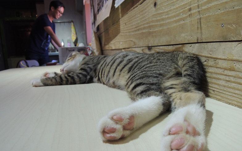 【画像10】人懐っこく、膝の上でもおとなしくしている猫たち。遊び疲れてデスクの上で眠ってしまった(写真撮影:アポロ計画)