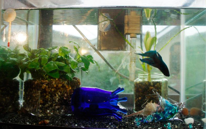ショップ 熱帯魚