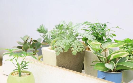 100円均一ショップの植物も工夫次第でこんなにオシャレに!