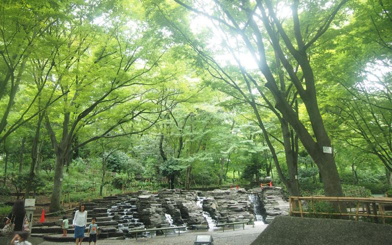 【画像1】サンシティの真ん中にある森の入り口にある滝の広場。夏には子どもたちが水遊びで楽しむ様子も見られる。森の中に入るとBBQ広場、タケノコ堀りができる竹林、木登りができるトトロの木、シイタケ栽培コーナーなど自然に親しめる仕掛けがいっぱいある(写真撮影:SUUMOジャーナル編集部)