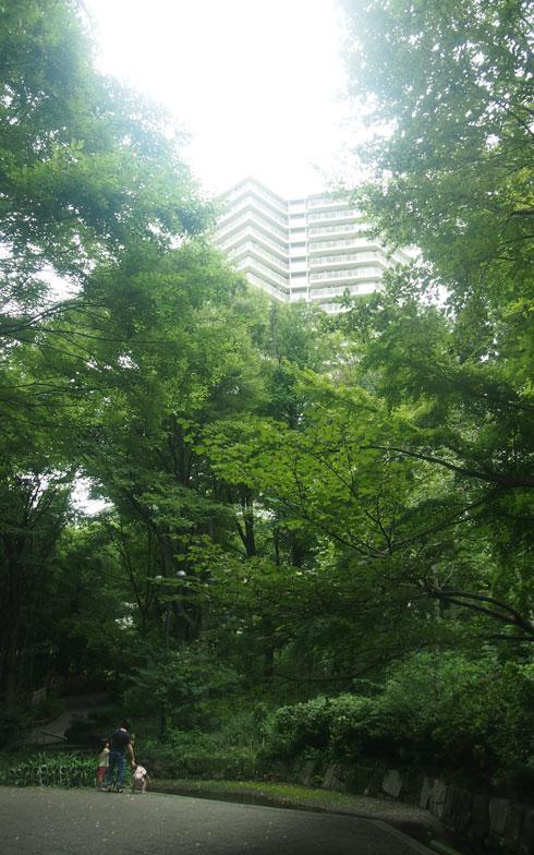 【画像2】大きく成長した森の木々の合間から住棟が垣間見える。敷地内の緑は「サンシティ・グリーン・ボランティア」と呼ばれる住人たちによって、月1~2回手入れされている(写真撮影:SUUMOジャーナル編集部)