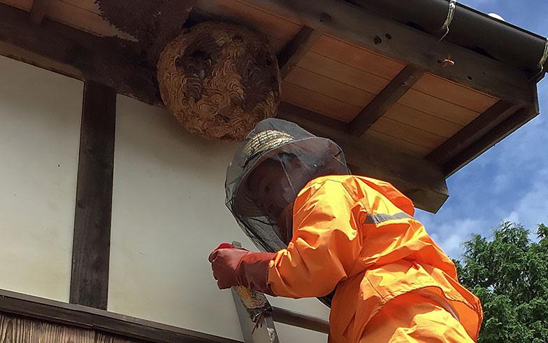 10月までがピーク時期!ハチの巣駆除にかかる費用は?
