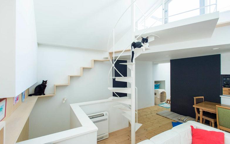 【画像1】キャットウォークとらせん階段でくつろぐ猫たち。ここがお気に入りの場所(写真撮影:和田真典)