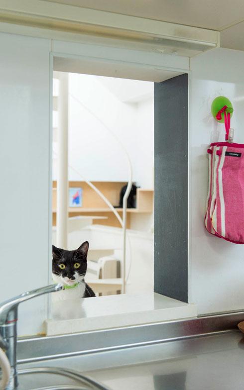 【画像4】ダイニングからキッチンを覗く猫のいご君(写真撮影:和田真典)