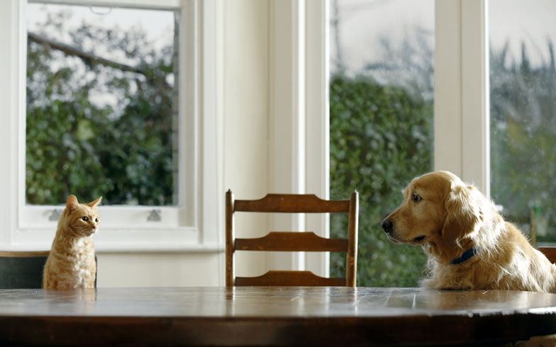 ペット飼育OKなのに「猫」はNG、の賃貸住宅