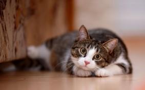 大家さんの大いなる誤解、猫が賃貸で嫌われる理由とは