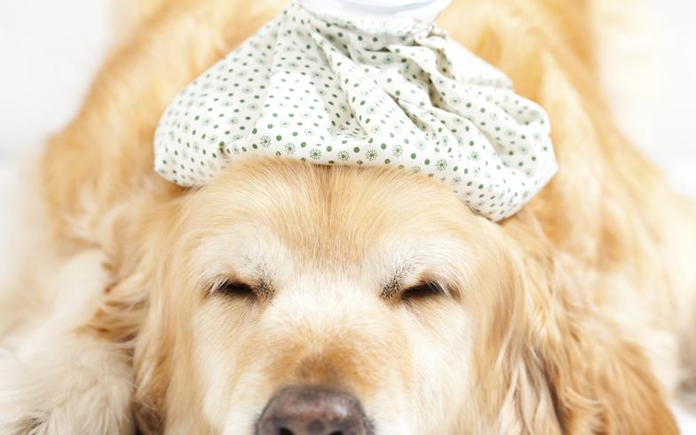 犬や猫も…ペットの風邪? 獣医さんに聞く原因・症状・予防