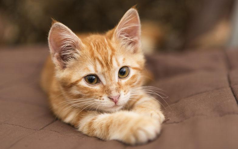 脱走名人の猫、この習性を知らない業界関係者が多すぎる