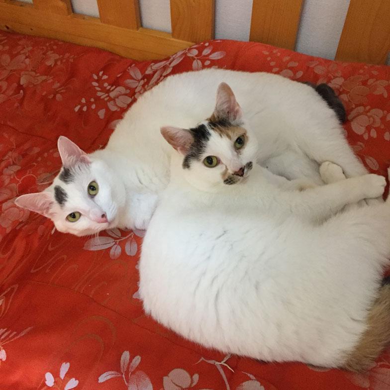 【画像1】東京キャットガーディアンから筆者が譲り受けた猫たち