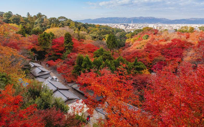 京都の紅葉シーズン、ウィークリーマンションに滞在するといくらかかる?