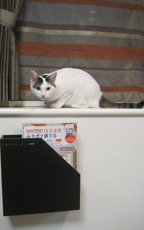 【画像6】『壁美人』のウォールポケット。DIY未経験でも、猫の手も借りずにラクラク設置できた!猫が乗るのはもちろん禁止だ(写真撮影:佐藤由紀子)