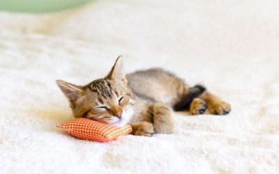 猫にとっての「理想の住まい」に欠かせないものとは