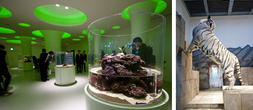 【画像2】「みずべにふれる」コーナーの展示。ホワイトタイガーは迫力満点!(写真撮影:井村幸治)